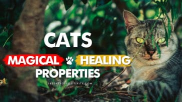 cats healing properties